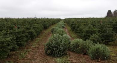 kerstboom-3-800x430