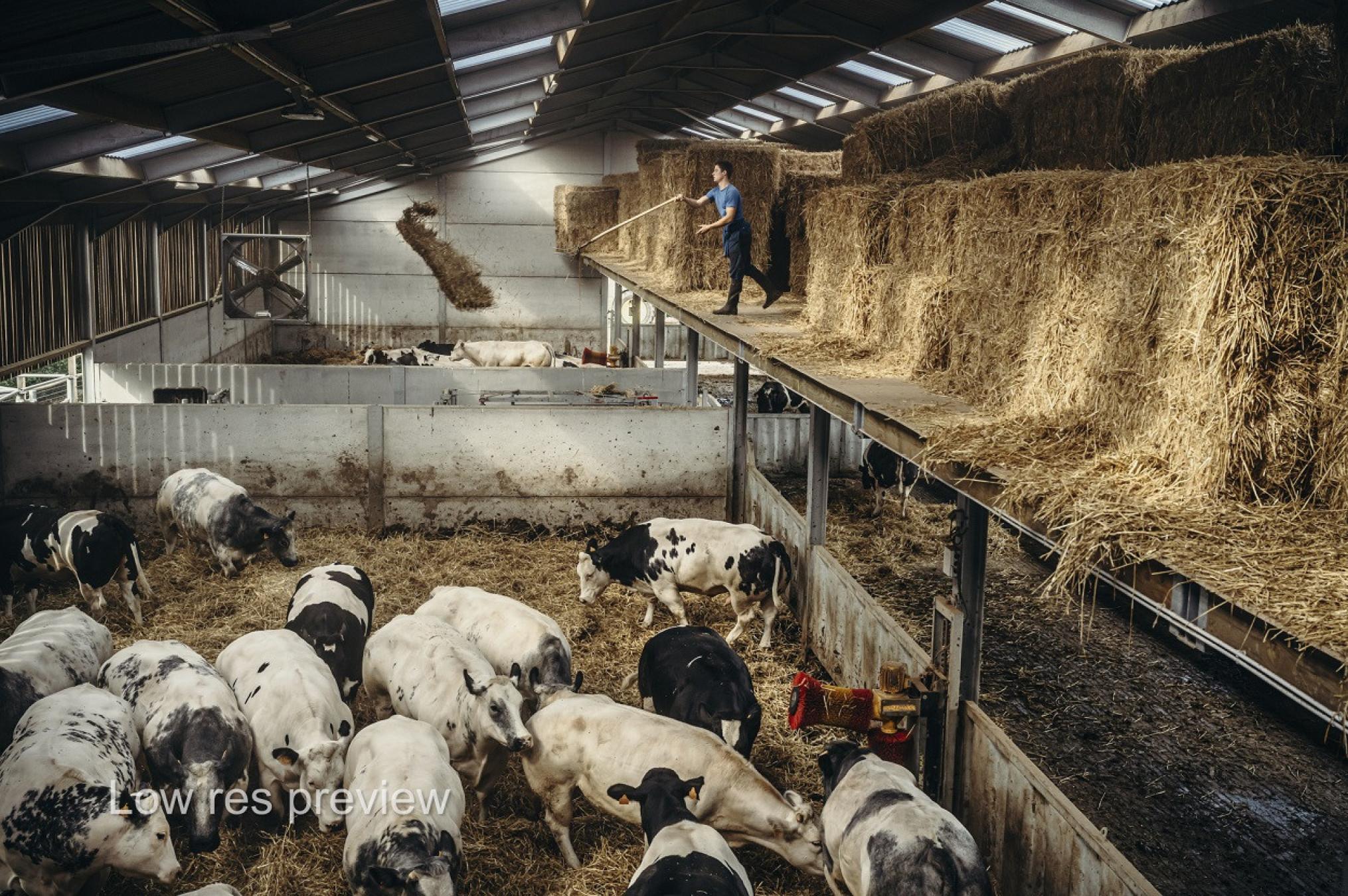 fotoreportage-VLAM-jimmyKets-vleessector-2-1250