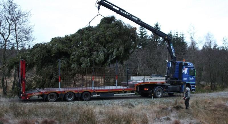 kerstboom--truck-laden-6-1000