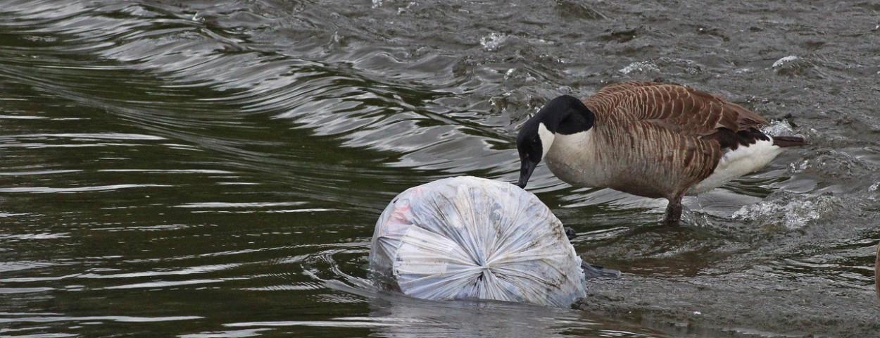 vervuiling-gans-biodiversiteit-VN-1280