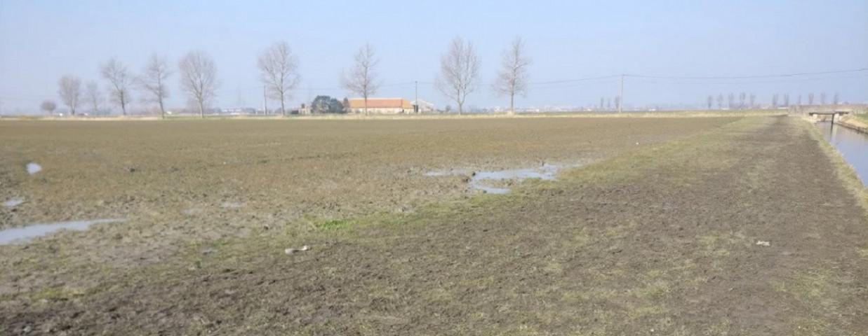 grasstrook-beschadigd-VLM-1250