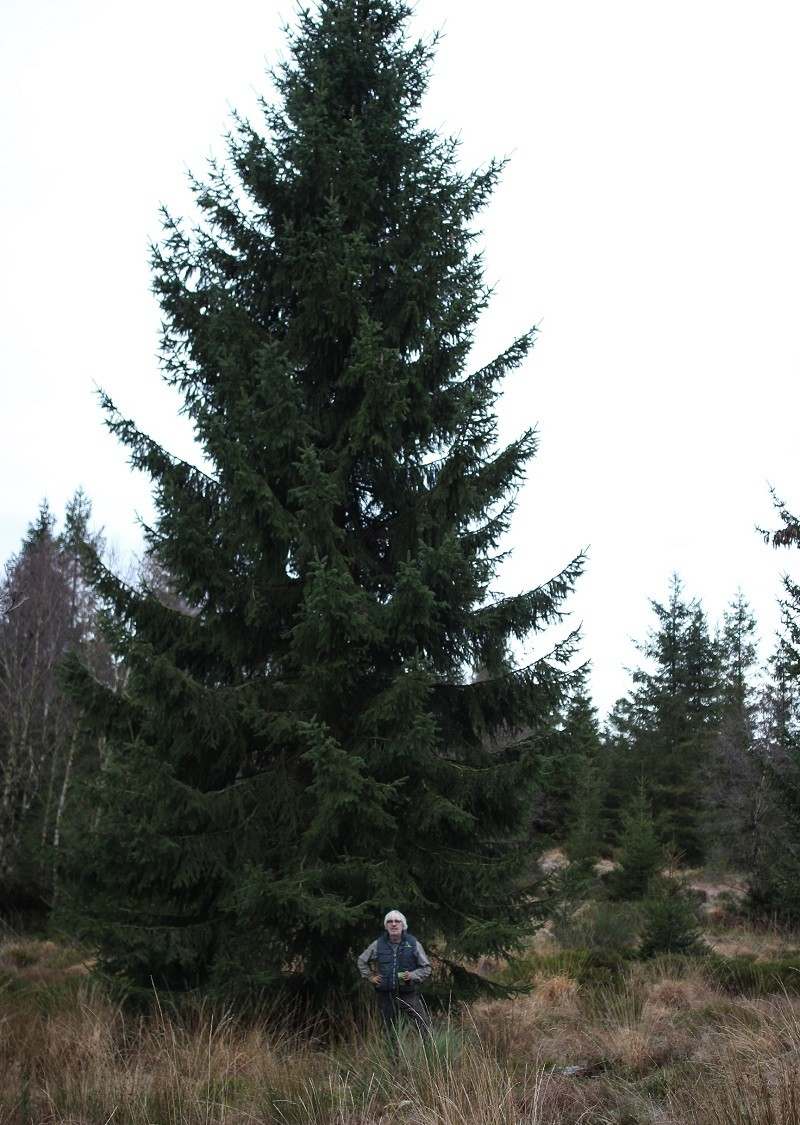 kerstboom-rechtstaand-7-800
