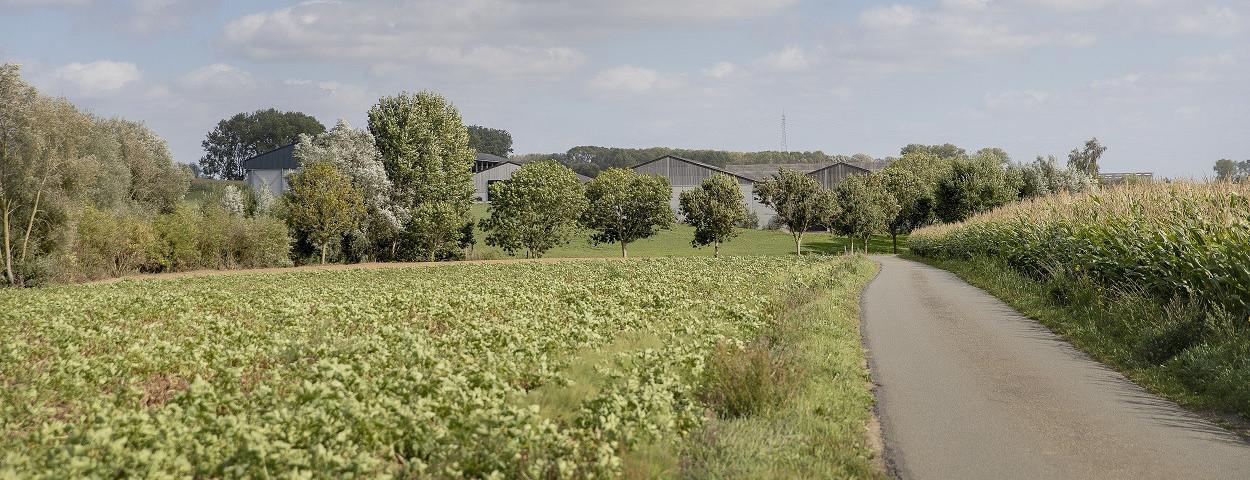aanplanting-houtkant-landschap-Inagro-1250