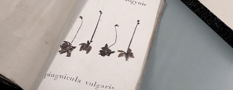 project-florient-herbarium-1250