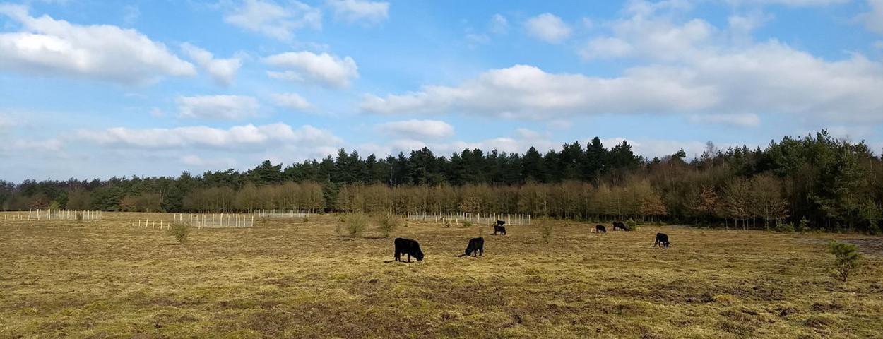 grazers graslanden_VUB