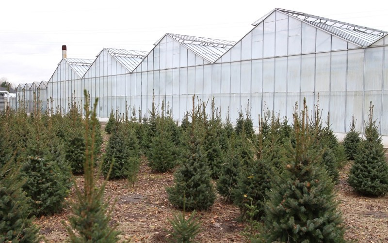 kerstboom-8-1000