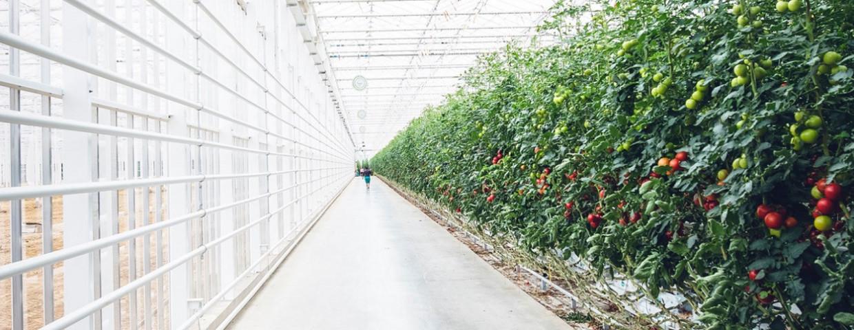 interreg-2 Zeeën programma-tomatenteelt-1250