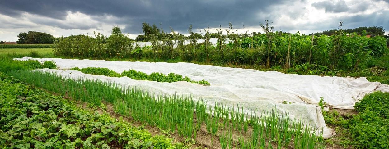 bioforum-biologischelandbouw-kobevanlooveren-1250