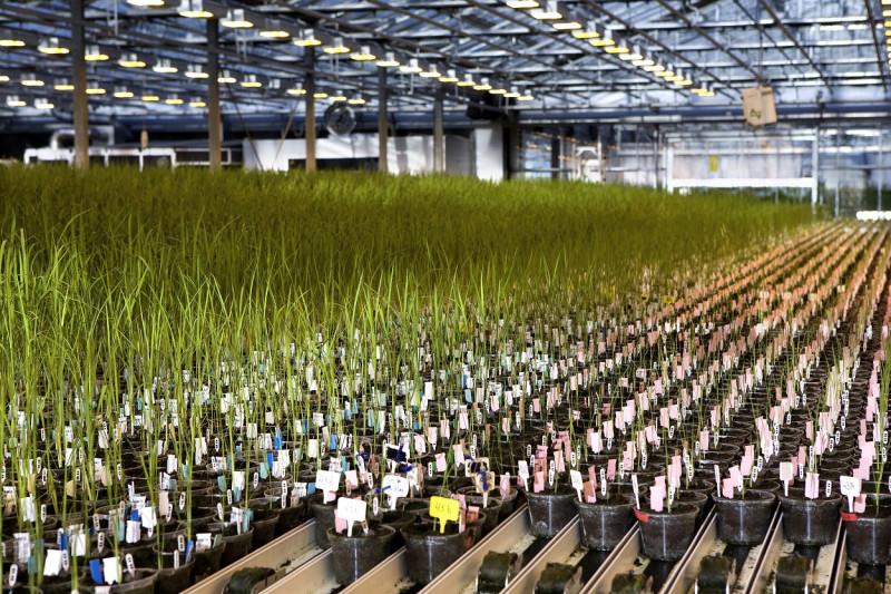 cropdesign-serre-planttray-nevele-BASF-1250