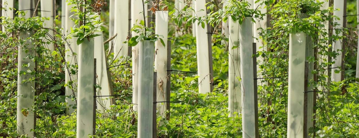 bosbouw-bomen-opfok-1280
