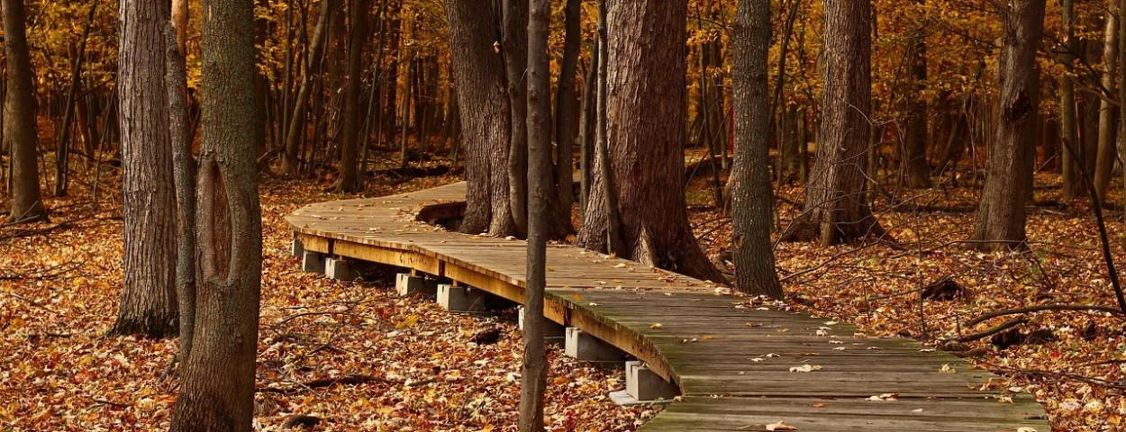 bosweg-bospad-natuur-park-landschap-1280
