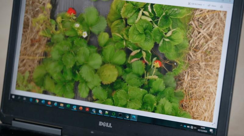 drone-aardbeiteelt-flandersMake--computerbeeld-1250