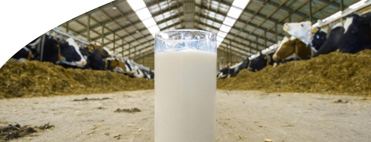 MilkBE_jaarverslag_2021_NL_cover