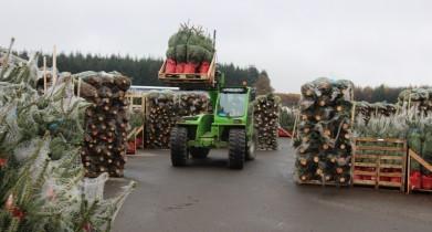 kerstboom--laden-4-800x430
