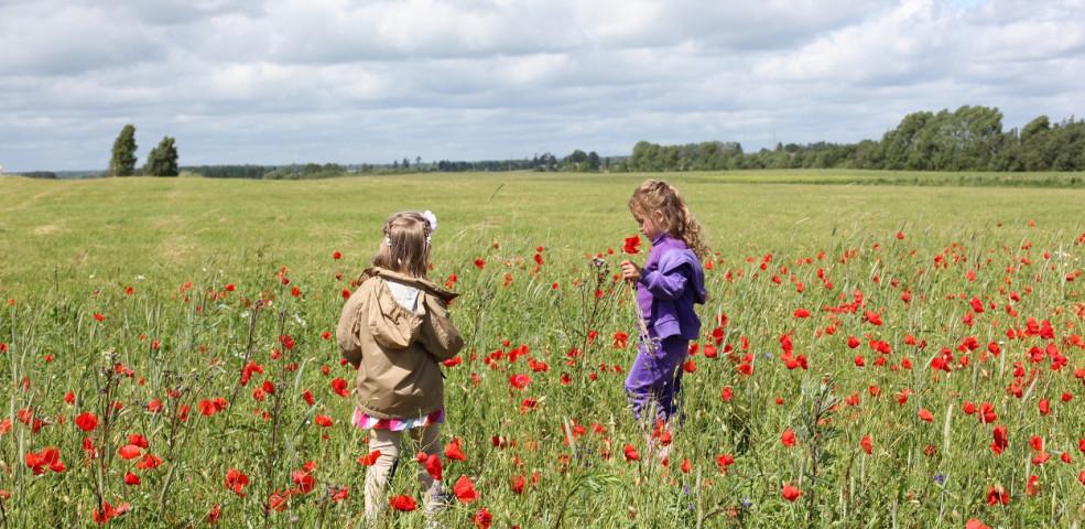 akker-veld-wandelaar-bloemenstrook-beheerovereenkomst-1250