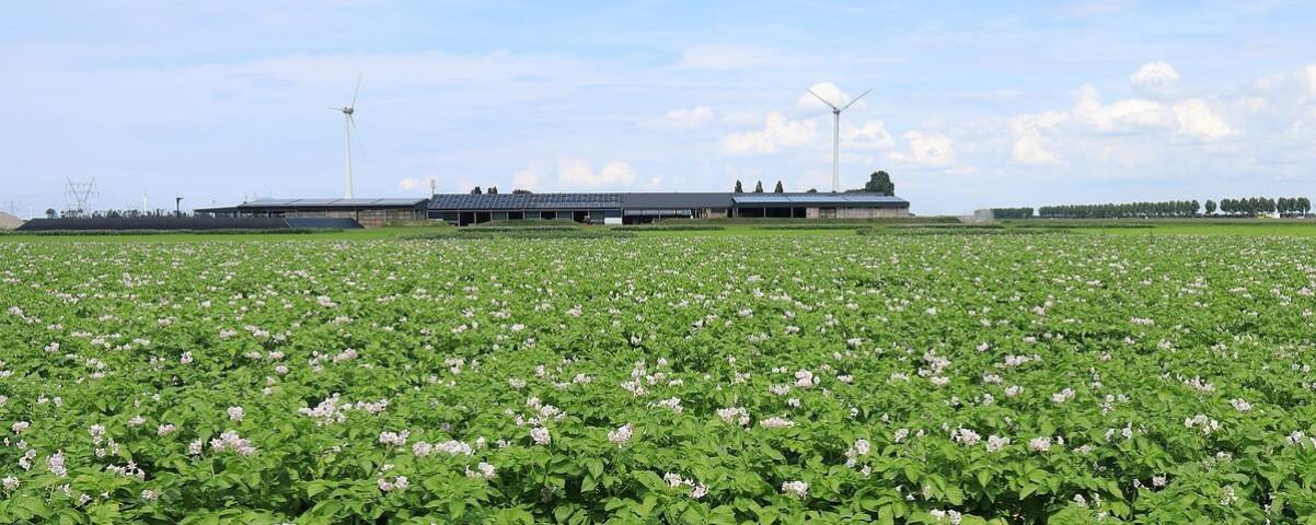 aardappelveld-potatoeurope-1200