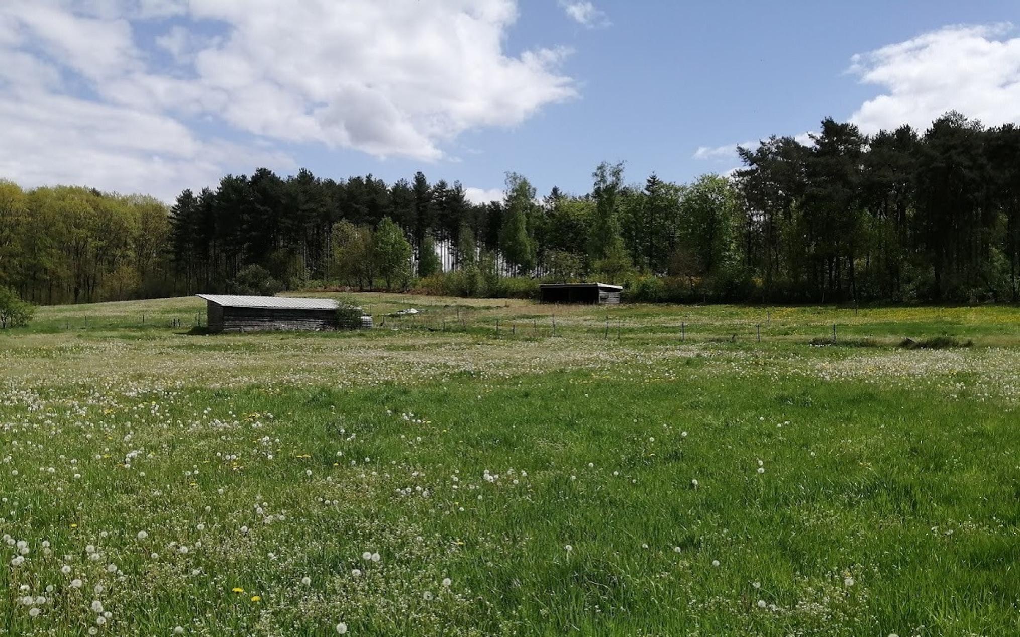 stikstof-varkensbedrijf-diest-afbraak-omgeving-natuur-1225