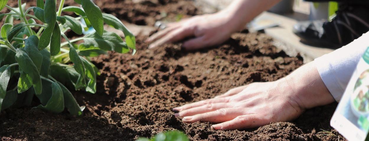 biologisch-biolandbouw-zaaien-plant-salie-1280