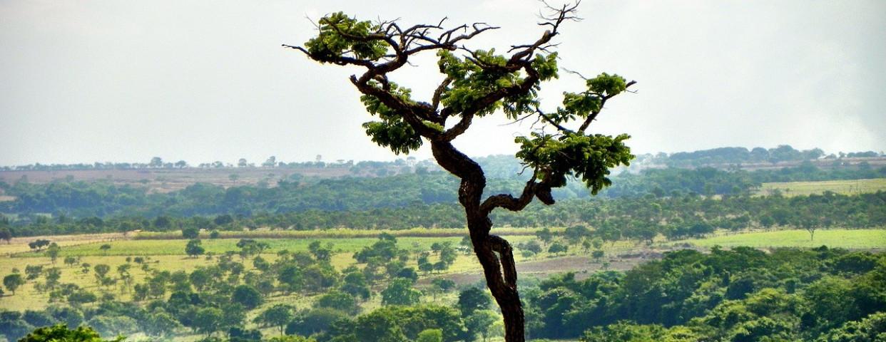 cerrado-goias-brazilie-ontbossing-mercosur-1280