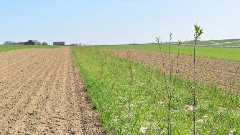 vlm-bufferstrook-beheerovereenkomst-biodiversiteit-1250