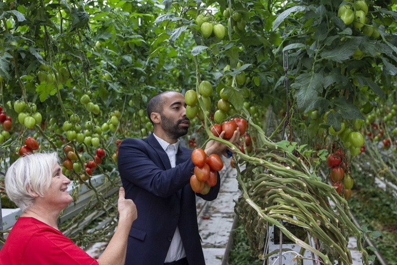 Tomaten_Sammy Mahdi_Boschkant  (8)