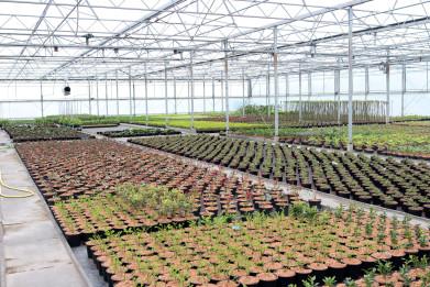 DV Plant Menen (15)