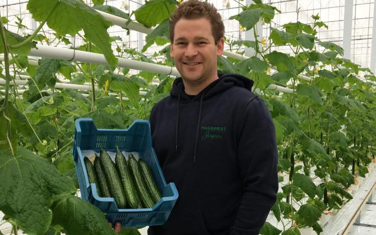 komkommerteler Jasper Haghedooren_REO Veiling
