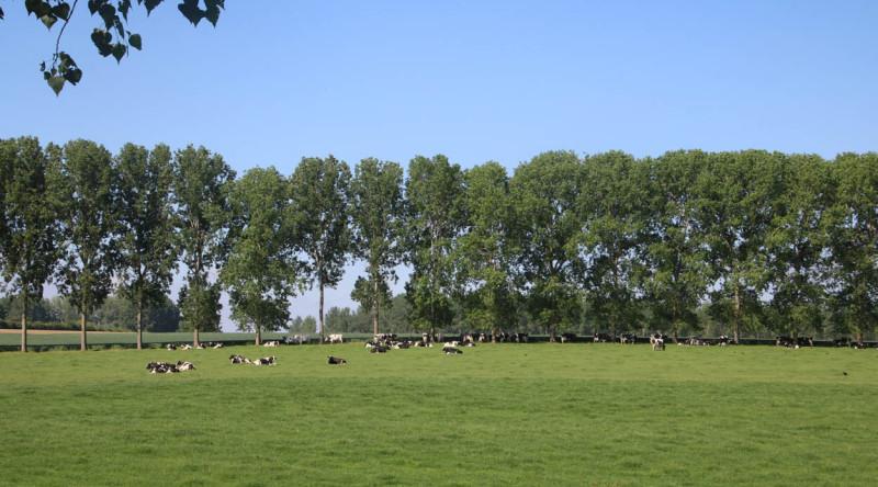 weide landschap melkkoeien ABS Natuurpunt