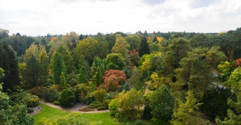 Arboretum Bokrijk Japanse hulst ilex smal