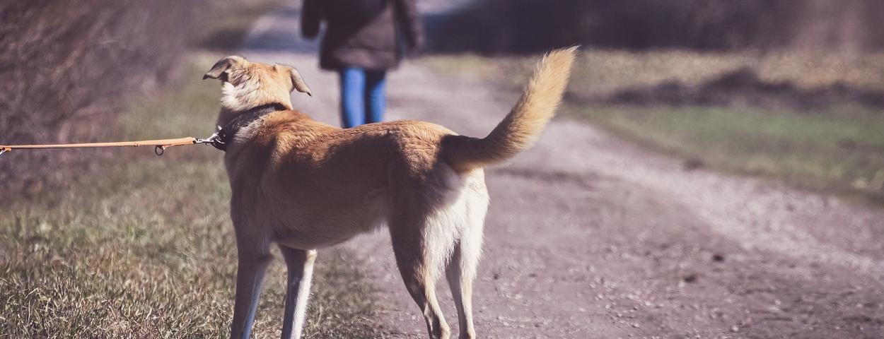 dierenwelzijn-mishandeling-hond-verwaarlozing-1280
