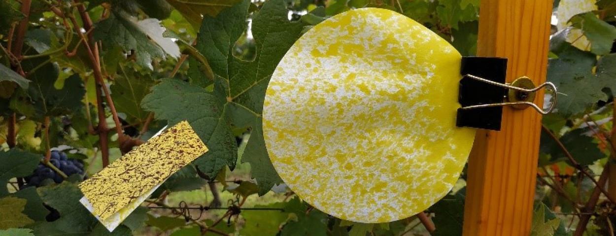 vineyard_deposition measurements